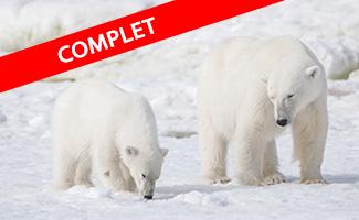 Arctique - Expédition polaire au Spitzberg