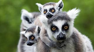 Madagascar, la route du Sud